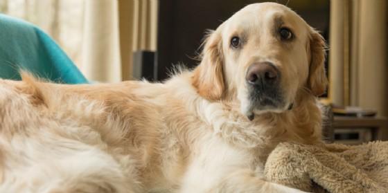La padrona muore, alla prima occasione il cane scappa e va a cercarla (© Shutterstock.com)