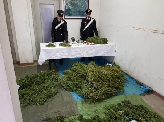 La marijuana sequestrata (© Carabinieri)