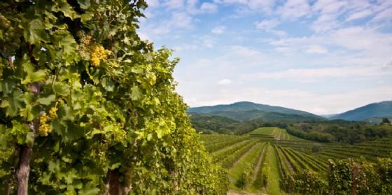 Collio: Shaurli-Bolzonello, Slovenia appoggia candidatura Unesco (© Adobe Stock)