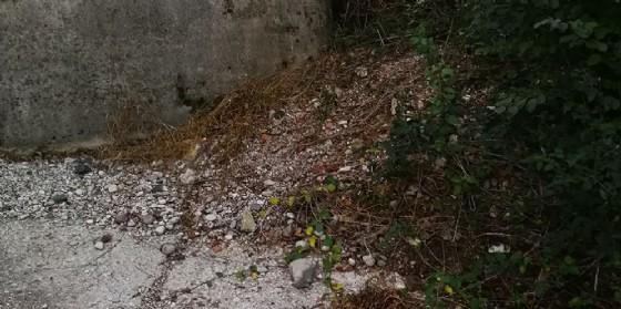 Dopo la denuncia eseguita la bonifica lungo il fiume Isonzo a Pieris (© Fare Verde Gruppo 'P.Colli' Monfalcone)