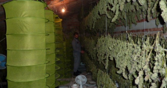 Piantagione cannabis a Rimini, 2 arresti