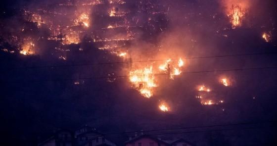 15 anni per ricostruire un bosco in fiamme