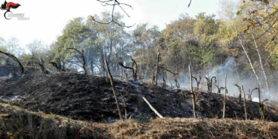 A fuoco un ettaro di bosco: denunciati padre e figlio
