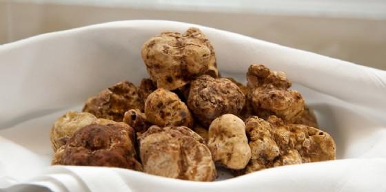 Fiera del tartufo bianco pregiato friulano: Alla scoperta di un raro tesoro della terra (© Shutterstock.com)