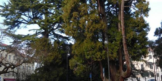 Udine: oltre 500 tra alberi e arbusti di pregio in oltre 70 parchi e strade