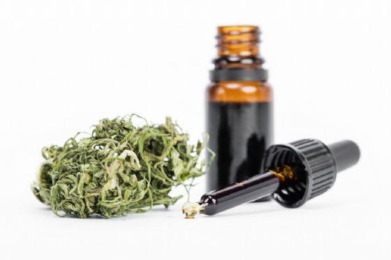 Apre un nuovo Cannabis Store a Rimini