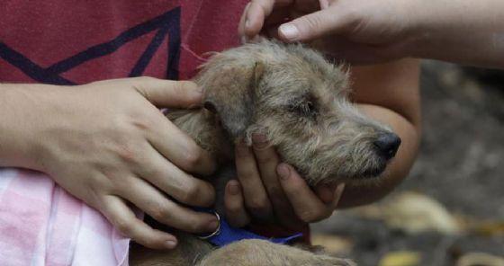 Il cagnolino ferito