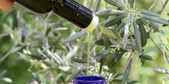Le stagioni e le olive, un incontro tecnico a Caneva di Pordenone