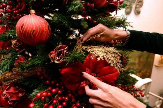 Spelacchio muore prima di Natale. La Raggi apre un'indagine interna?