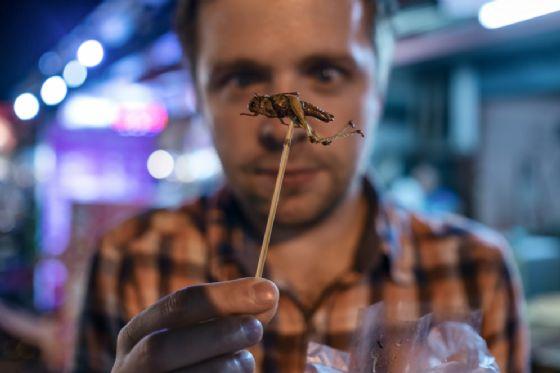 L'e-commerce (di due italiani) per comprare cibi a base di insetti