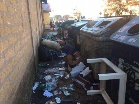 Un maiale si aggira indisturbato per i cassonetti stracolmi di spazzatura in zona Romanina