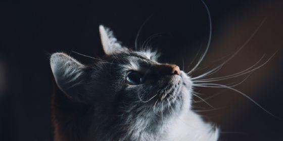 Sacile, gatto orfano di padrona eredita 30 mila euro