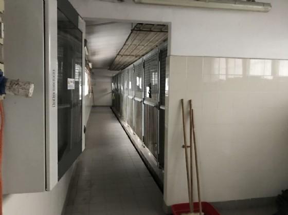 Il reparto di isolamento del canile