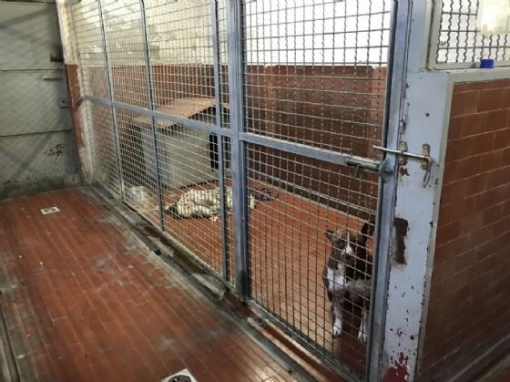 I box interni in cui vengono tenuti i cani