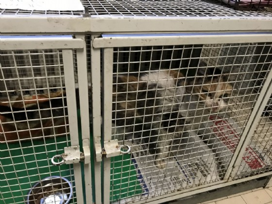 Le gabbiette in cui vengono tenuti i gatti