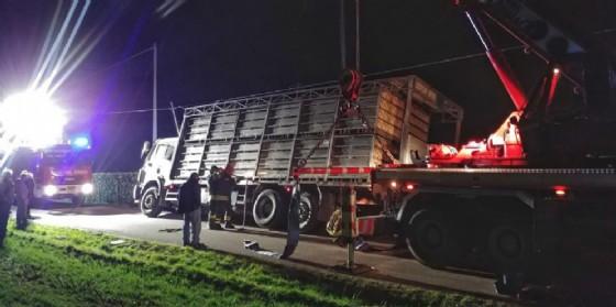 Pravisdomini, camion carico di animali esce di strada