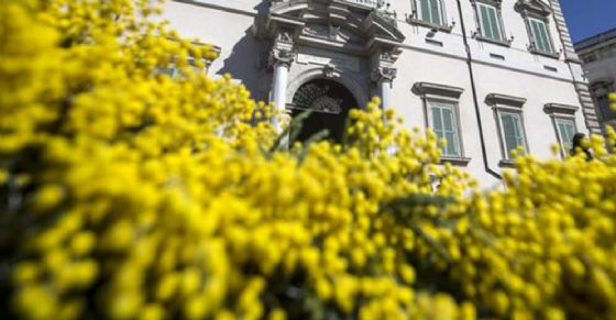 Tolleranza zero per i venditori abusivi di mimose a Torino