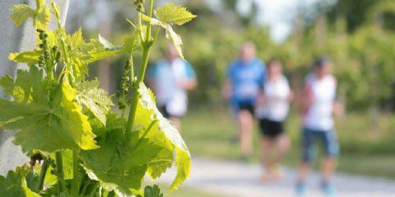 Sagra del vino in movimento: eventi podistici per bambini, genitori e amici a 4 zampe