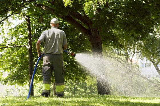 I settori dove potranno essere impegnati i lavoratori con disabilità comprende anche la manutenzione del verde pubblico