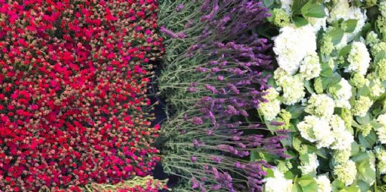 """""""Fiordi a Pordenone"""": un giardino in città, tra piante, fiori, rarità e profumi"""