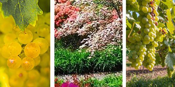 Fondazione Carigo: una nuova, attesa, conferenza a tema botanico per l'apertura del Giardino Viatori
