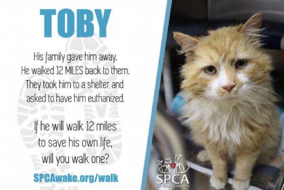 Toby, il gatto che ha percorso 20 chilometri per arrivare a casa