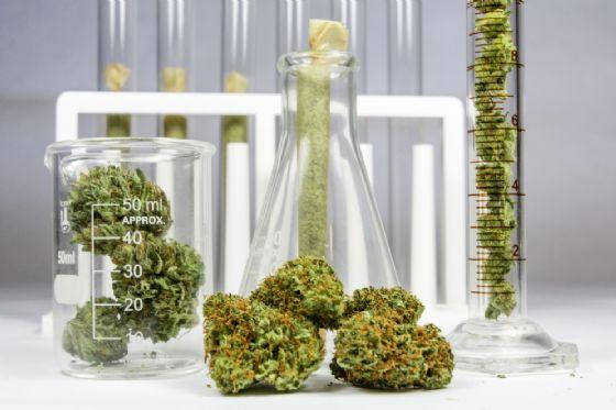 La cannabis legale al supermercato e un giro d'affari di 25 miliardi