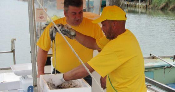 Pesca di Campagna Amica: a Marano torna la vendita diretta