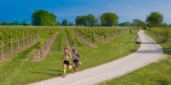 A Casarsa ritorna il Running tra le vigne e la Marcia del vino