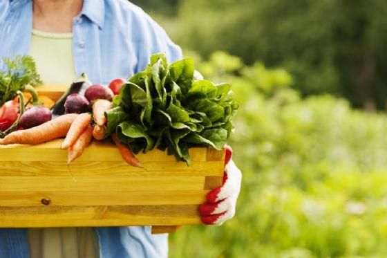 Il costo del cibo biologico