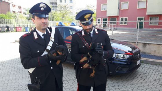 I carabinieri con due cuccioli di rottweiler