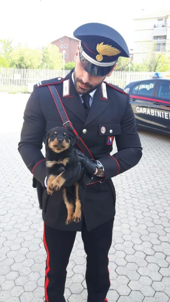 Uno dei cuccioli