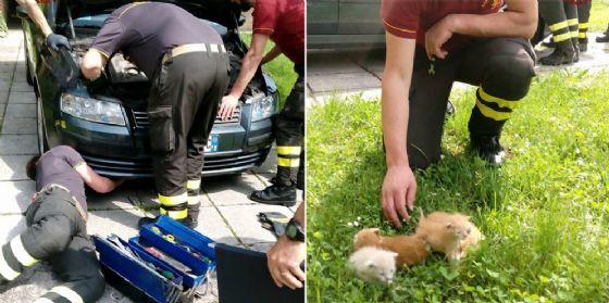 Pordenone: nascosti nel cofano di un'auto, gattini salvati dai vigili del fuoco
