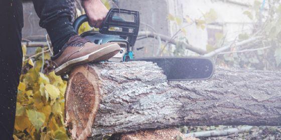 Taglia e ruba illecitamente legna da un bosco privato, denunciato