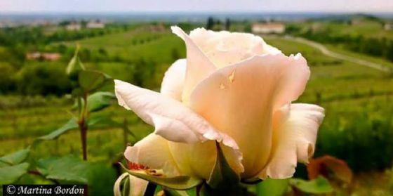 Rosazzo da Rosa: al via la XIV edizione