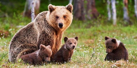 Riapre i battenti per la stagione 2018 il centro visite 'Villaggio degli orsi'
