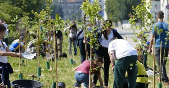 L'iniziativa 1000 alberi a Torino (© Comune Torino)