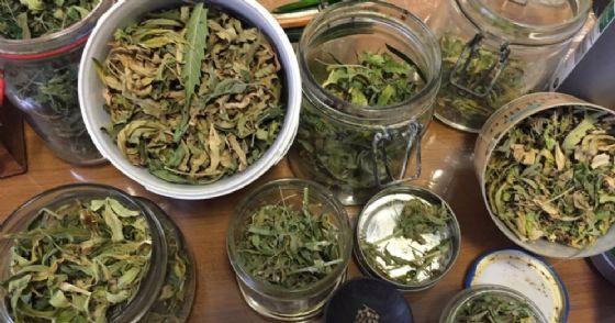 Ritrovati 240 grammi di marijuana e il necessario per confezionare le dosi