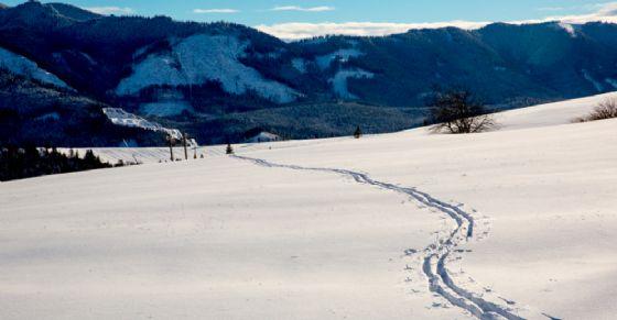 Cadavere trovato tra le neve a Bardonecchia (© Shutterstock.com)