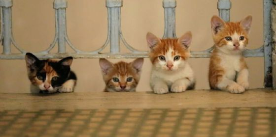 Kedi: la città dei gatti, al Centrale