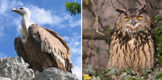 Alla Riserva Naturale Regionale di Cornino c'è 'Griffonday'