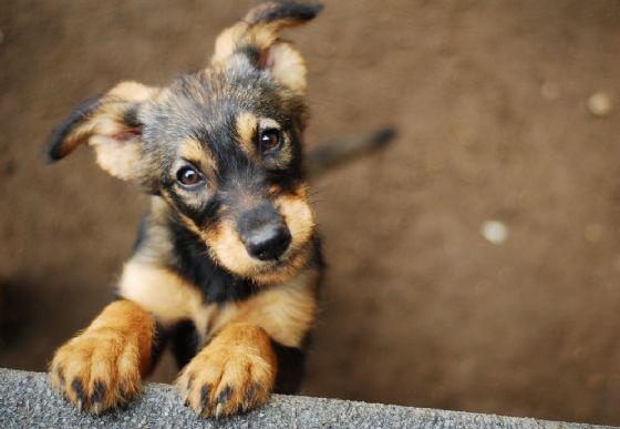 I cani trasmetteranno in futuro virus all'uomo