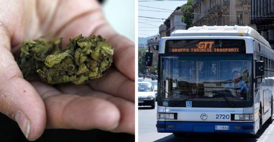 Marijuana a bordo dei bus Gtt (© Shutterstock e Ansa)