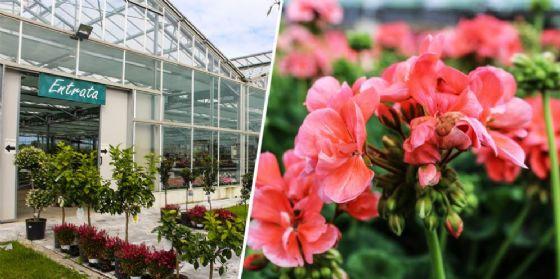 Piante e fiori da terrazzo: ecco come colorare al meglio le nostre ...