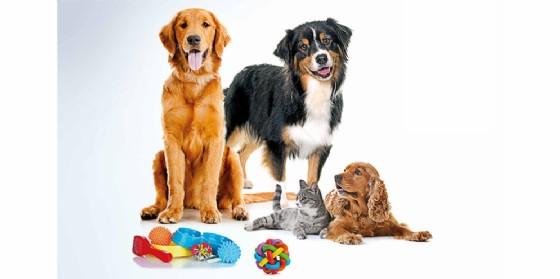 "Il famoso cane Rex ospite in esclusiva a Villesse per il ""Pet show Amici a 4 zampe"""