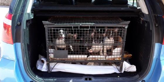 Traffico animali tra Fvg e Carinzia: 500 controlli a valico Fernetti