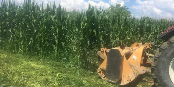 Gli agricoltori biologici contro Fidenato: «La sua 'battaglietta' è puro folklore»