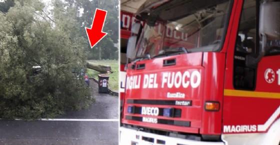 Cade un grosso albero in lungo Po Antonelli