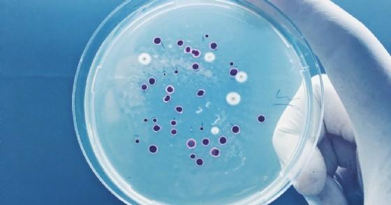 Pericolo Mycoplasma genitalium