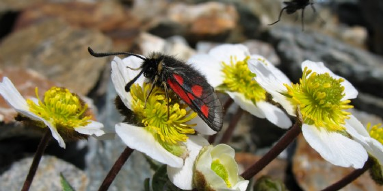 Safari in Val Resia: nuova avventura della Casa delle Farfalle
